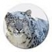 Mac OS X Snow Leopard download